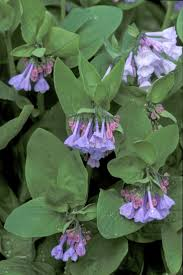 native plants of india 82 best native kentucky plants images on pinterest native plants