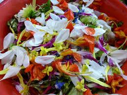 cuisiner les fleurs cueillir et cuisiner les plantes et fleurs sauvages georges