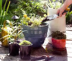 container gardening magazine gardening ideas