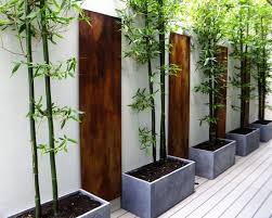 bambus fã r den balkon 105 best hofgestaltung images on landscaping home and