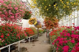 david welch winter gardens visitaberdeenshire