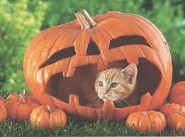 pumpkin backgrounds for halloween a halloween cat in a pumpkin hd desktop wallpaper widescreen