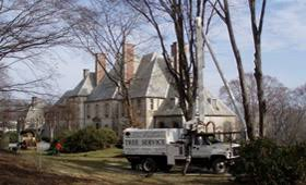 All Island Landscape by New England Tree Preservation Dedicated To Environmentally Safe