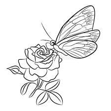 butterfly on blooming small bud and leaf stock vector