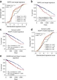signature an nrf2 target gene signature and a human derived keap1 mutant