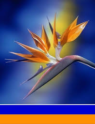 Blue Orange Color Scheme 37 Best Blue Teal Brown Orange White Colour Scheme Images On