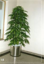 artificial trees buy in bangalore on