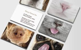 pet care veterinarian business cards animal care vets moo