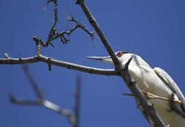 tree trimmer apologizes for oakland baby bird fiasco sfgate
