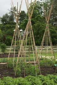veggie trellising ideas from longwood gardens fine gardening