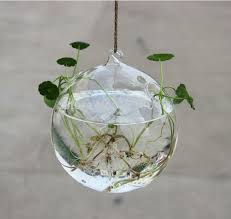 3pcs set dia 10cm blown glass globe hanging planter terrarium