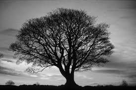 projects big tree
