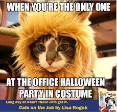 Halloween Cat Meme - the old man and the cat macmillan library