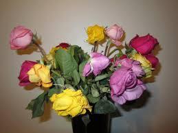 Order Flowers Online Why Not To Order Flowers Online U2013 Proflowers Vs Florists