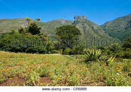 Kirstenbosch National Botanical Gardens by Africa South Africa Cape Town Kirstenbosch Botanical Gardens