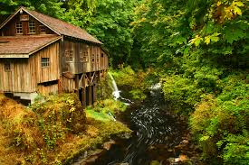 fall forest stream wallpaper