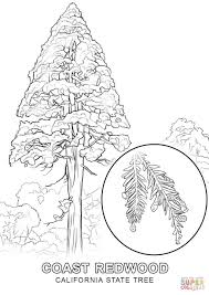 california state tree coloring page free printable coloring pages