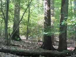Maryland forest images Frequently asked questions forestry and wildlife university of jpg