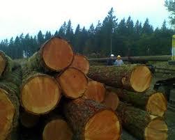 selling timber 1 800 log alot logging washington trees pacific