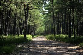 le si e droga w lesie fotografia przyrodnicza i podróżnicza trust in