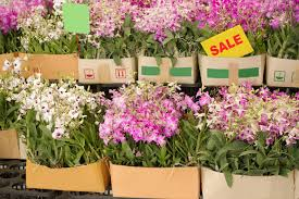 orchid plants for sale box of orchid flower are on sale in plant market stock photo