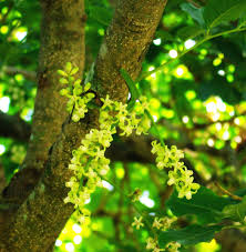native nz plants native plants j n piha piha beach piha new zealand