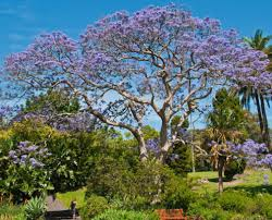 our 5 best flowering trees for southern california landscaping