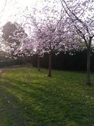 saughton park u2013