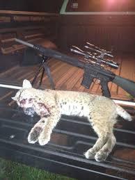 hunting lights for ar 15 testimonials