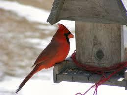 Birds In Your Backyard Best 25 Identify Birds Ideas On Pinterest Nest Of Birds Bird