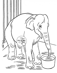 zoo elephant coloring page for kids animal coloring pages