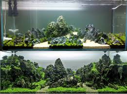 from the start to finish aquascape by greg charlet aquascaping