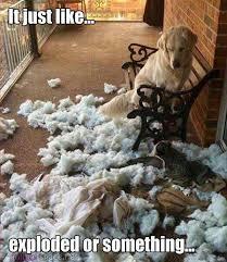 boxer dog jokes funny dog pics and videos