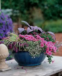 Unique Plant Pots 103 Best Container Garden Recipes Images On Pinterest Flower