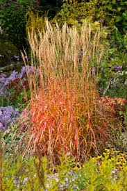 318 best злаки images on ornamental grasses gardens