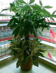 indoor plants singapore skyland gardening plants rental
