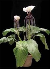 Low Light Indoor Flowers 45 Best Plants U0026 Flowers That Don U0027t Need Sun Images On Pinterest
