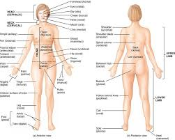 Google Human Anatomy Anatomical Divisions Of The Body Google Search Anatomy