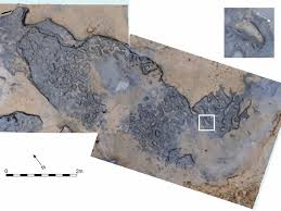 How To Keep Footprints Off Laminate Floors The History Blog Blog Archive 800 000 Year Old Footprints