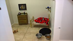 chihuahua has own bedroom under woman u0027s stairs like some kind of