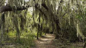 possible border wall plans would be devastating for santa ana in santa ana national wildlife refuge paths meander under trees draped in spanish moss past subtropical wetlands and through chihuahuan desert habitat