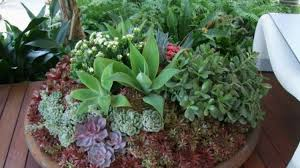 12 Best Plants That Can by The Best Potted Plants For Full Sun Part Sun And Shade