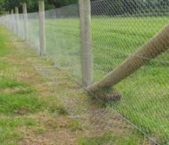 rabbit proof garden fencing