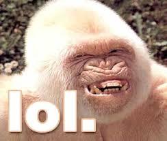 Funny Piccies Images?q=tbn:ANd9GcTb6CQ95l9jZlU9wGUIrJsmK4RvIspOl5qowA8OdpcXqinIJtA&t=1&usg=__ARagXBGU5IyV4IvWCiNJcAuA99s=
