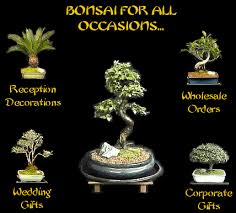 bonsai pots bonsai trees pre bonsai joshua roth tools bonsai