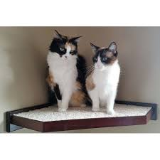 cat wall shelves catsplay com cat furniture