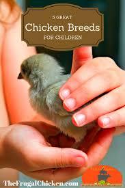Best Backyard Chicken Breeds by 165 Best Kids U0026 Chickens Images On Pinterest Raising Chickens