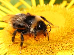 tory attempt to prevent complete eu ban on bee killing pesticides