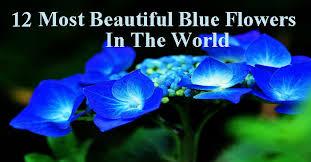blue flowers 3 jpg
