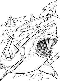 tiger shark coloring page u2013 pilular u2013 coloring pages center